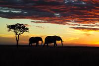 在草原与星空之间寻梦非洲