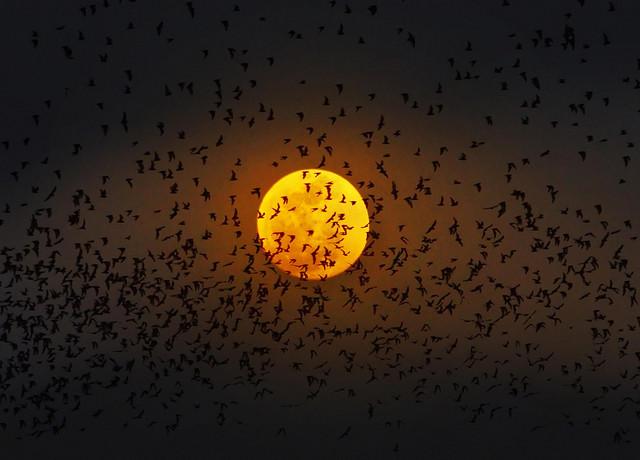 赏月正当时!中秋超级月亮拍摄全攻略